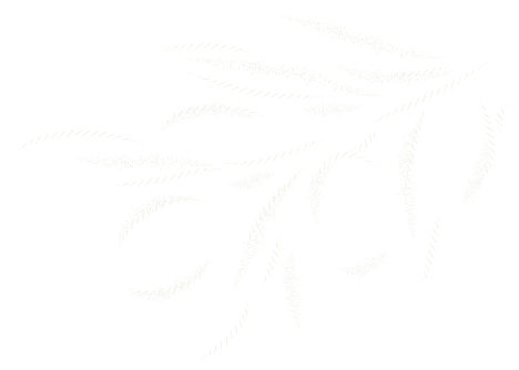 Herb Branch Graphic
